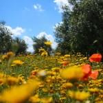 Equipment um Blumen zu fotografieren